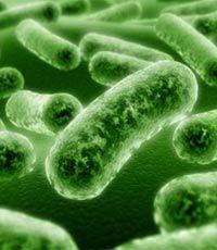 Кариес и инсульт вызывает одна бактерия